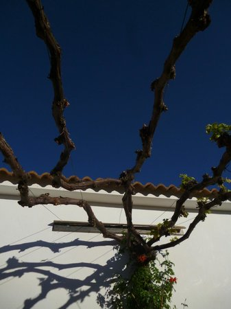 Casa Pino Solo: Vine growing by the pool