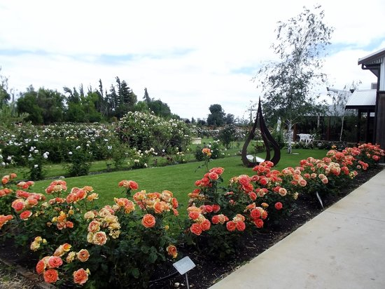 Ruston's Roses: The entry