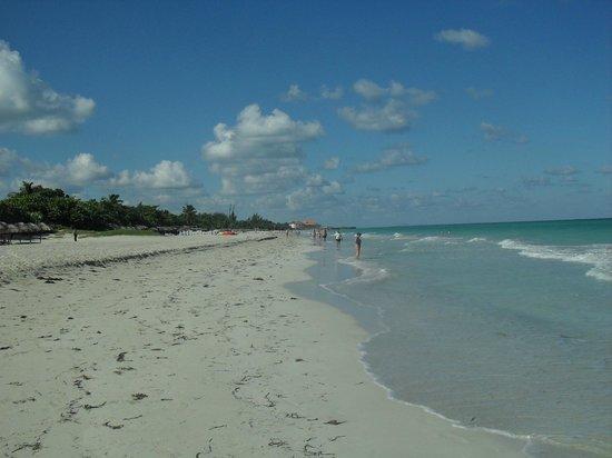 Be Live Experience Turquesa: Playa del hotel