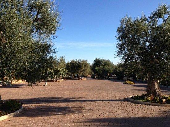 Masseria San Martino : The Masseria