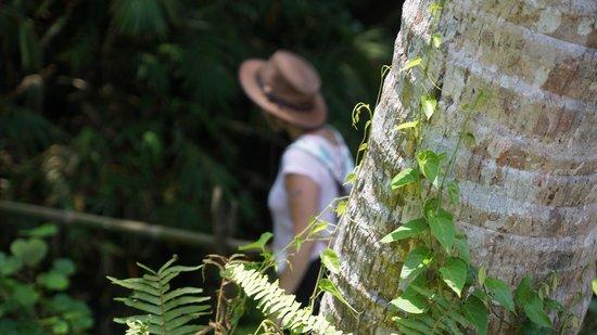 Jean de la Jungle Private Day Tours: l'aventure