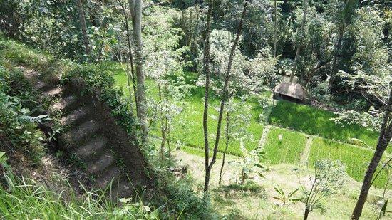 Jean de la Jungle Private Day Tours: le paysage