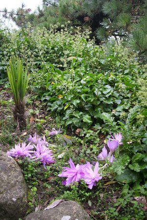 Lower Leas Coastal Park: nice plants in the park
