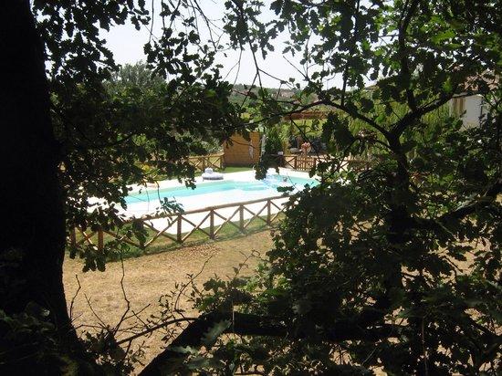 Agriturismo Le Baccane: La piscina immersa nel verde della campagna Toscana