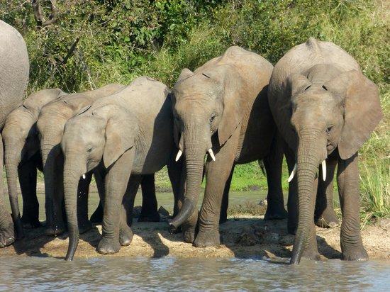 Ulusaba Safari Lodge: Elephants at the Watering Hole