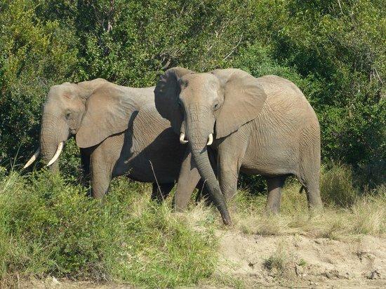 Ulusaba Safari Lodge: Elephants