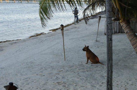 Rojo Beach Bar: one of their many sweet dogs