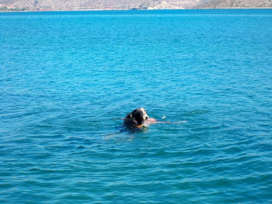 Akti Olous Hotel : Boo  the swimming dog
