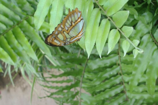 HOTEL BETANIA: Butterfly Park
