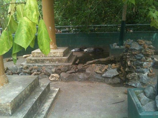 Zoo Bassin D'Arcachon : Enclos