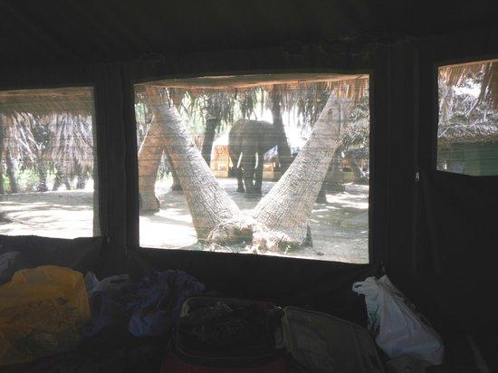 Epiya Chapeyu: View from inside the tent