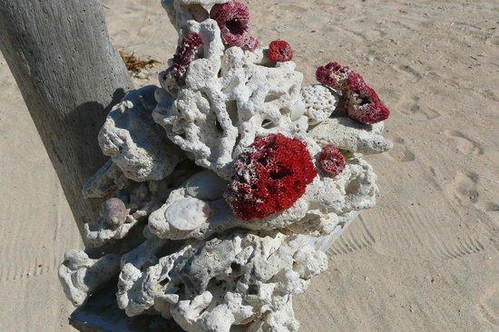 Balenta Bungalows: Corallo sulla spiaggia del Balenta a Gili Meno