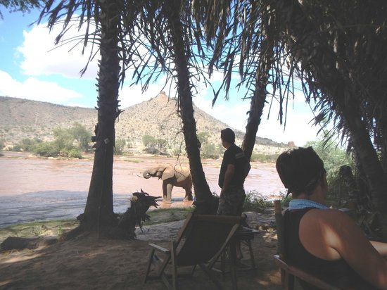 Epiya Chapeyu: Tusker stopping by for a drink