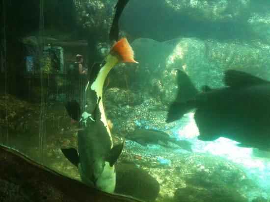 aquarium picture of aquarium du perigord noir le bugue tripadvisor