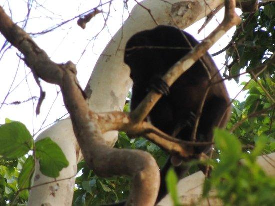 Lodge Margouillat : Animaux du Costa rica