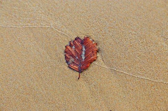Sandbanks: Clean sand
