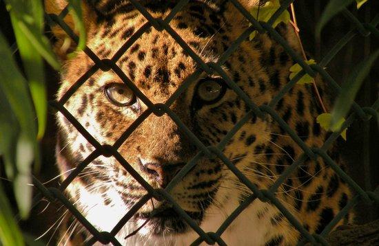 Zoo Boise: One of a few big cats