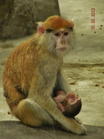 Zoo Boise: Newborn Patas Monkey