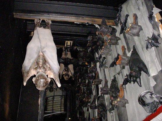 Bram Stoker's CASTLE DRACULA: Vampires Sleeping
