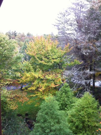 Mitchell's Lodge & Cottages: View from our room, there's a creek below