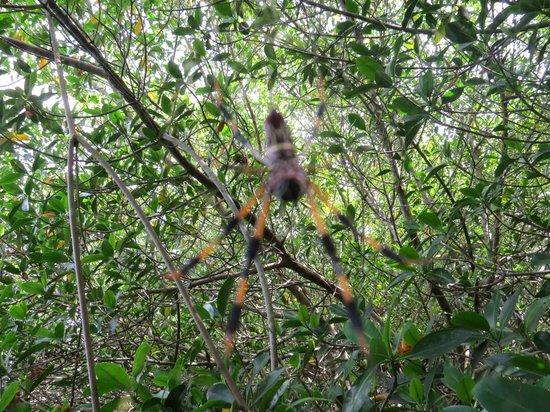 Tour the Glades - Private Wildlife Tours: Une belle araignée
