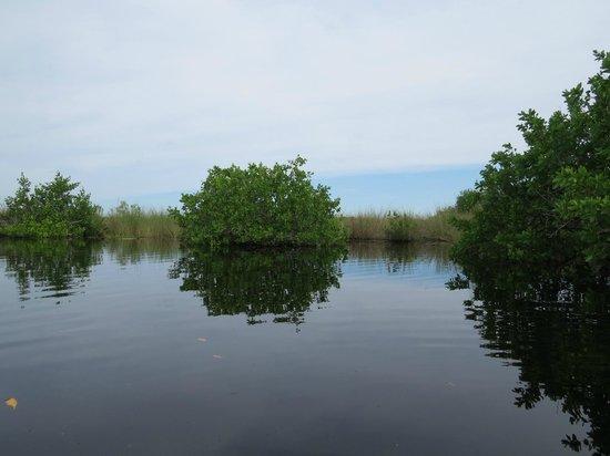 Tour the Glades - Private Wildlife Tours: Un plan d'eau tranquille traversé