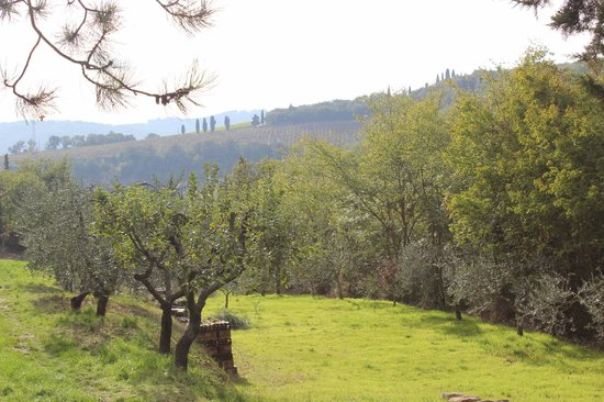 Borgo Lecchi B&B : Olive groves nearby