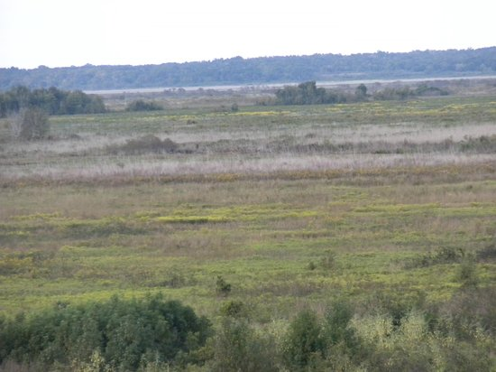 Paynes Prairie Preserve State Park: View of prairie from observation tower
