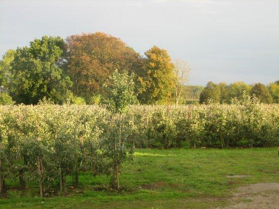 B&B De Fruithoeve: Morgendlicher Blick auf die Obstplantage!