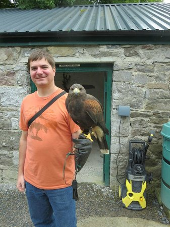 Ireland's School of Falconry : David with Milly