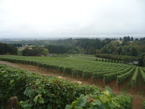 Wine Country Farm: vines