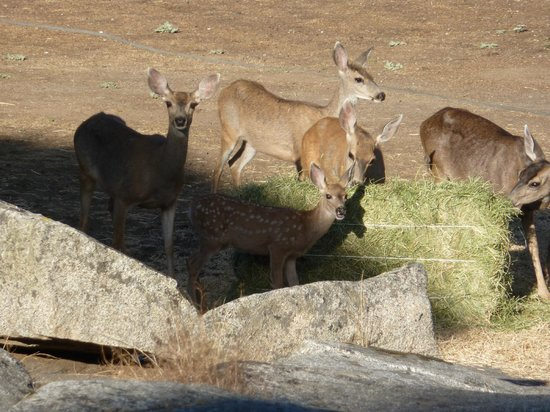 Restful Nest Bed and Breakfast: Deer coming to feed