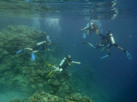 Melia Sinai: Дайверы  на рифе возле понтона отеля.