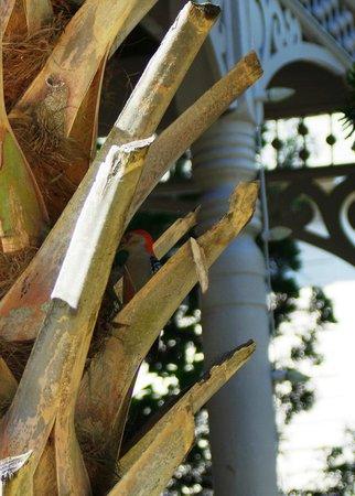 Peace and Plenty Inn: Wood Pecker