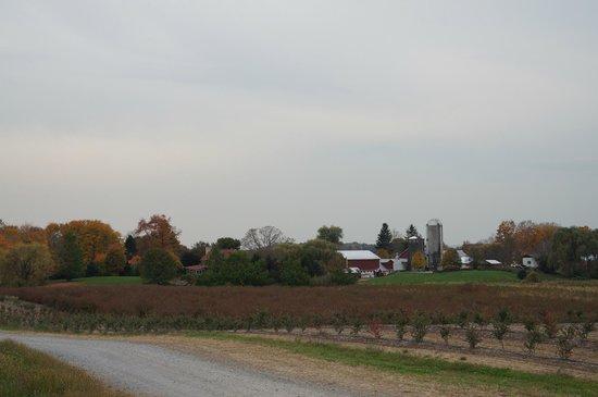 Greig Farm : The farm
