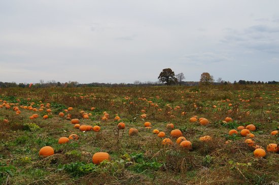 Red Hook, NY: Pumpkins
