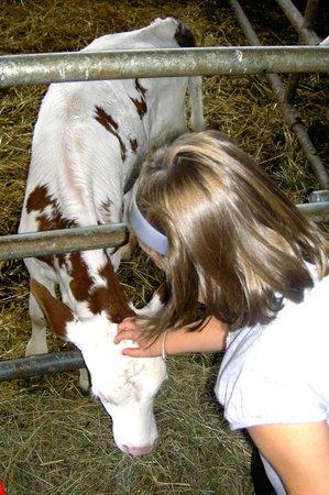Chez Chantal et Dany : Un veau né quelques jours avant notre visite.
