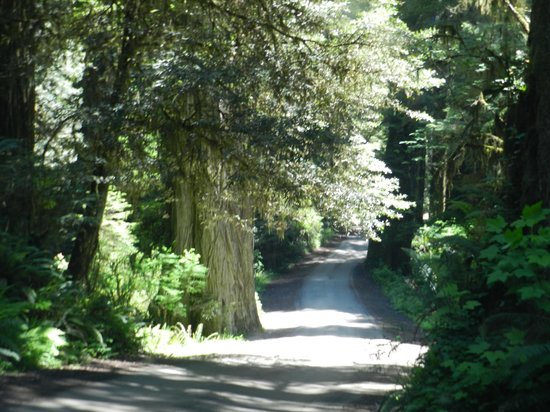 Redwood National Park: Driving through the Redwoods - An Awesome Experience!