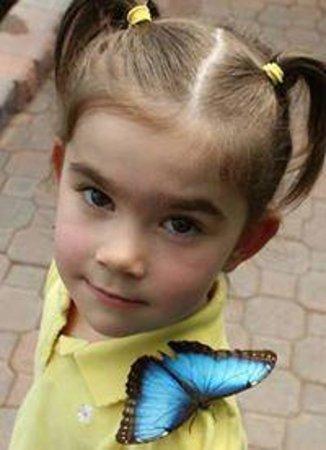 Newfoundland Insectarium: Butterfly Friend