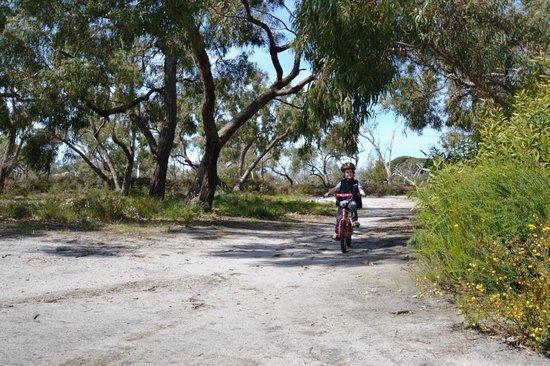Raymond Island: Bike riding tracks
