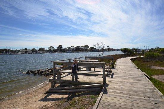 Raymond Island: Watch the boats go by