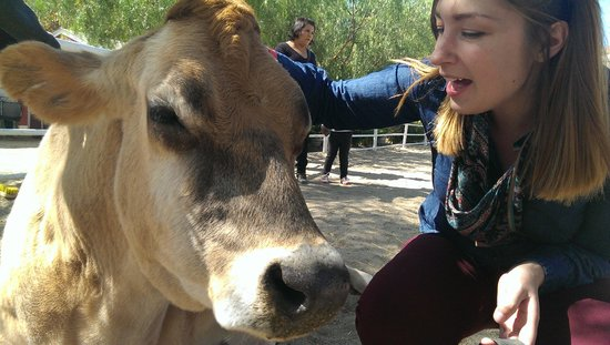 The Gentle Barn: My gf loving up a cute jersey cow