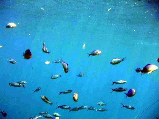 Plantation Island Resort: Reef fish
