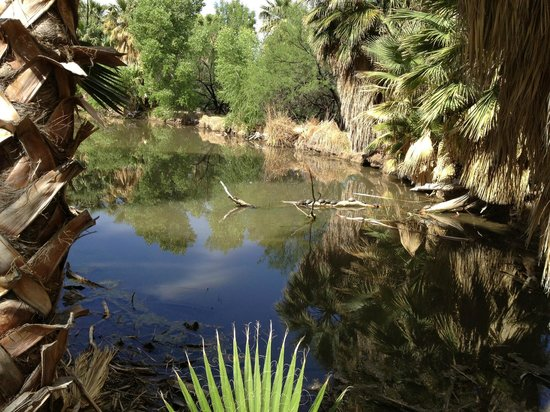 Agua Caliente Park: Look carefull to see turtles sunning themselves on a log.