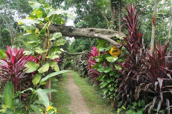 Hotel La Palapa Eco Lodge Resort: garten Eden
