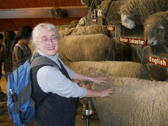 Agrodome : THICK wool!
