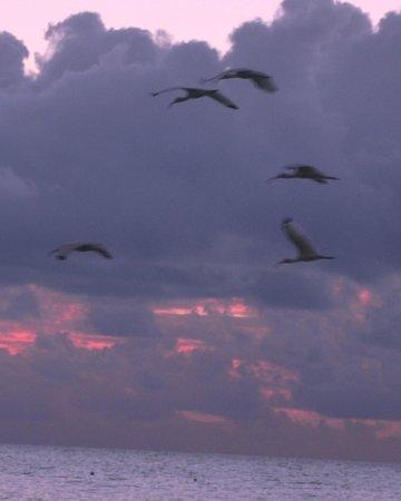 White Sands Inn: more birds