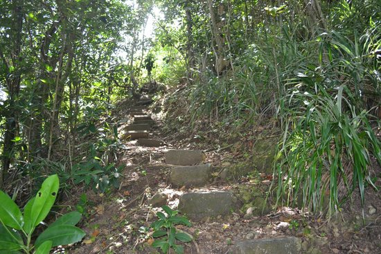 Calibishie Cove: some of the steps to Hodges Beach