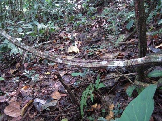 Anaconda Lodge Ecuador : Wildlife