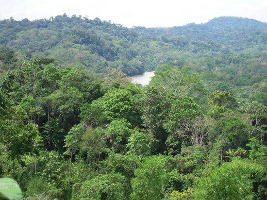 Anaconda Lodge Ecuador : Napo River from afar